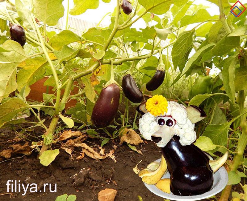 kompozitsii-iz-ovoshhej-i-fruktov-03
